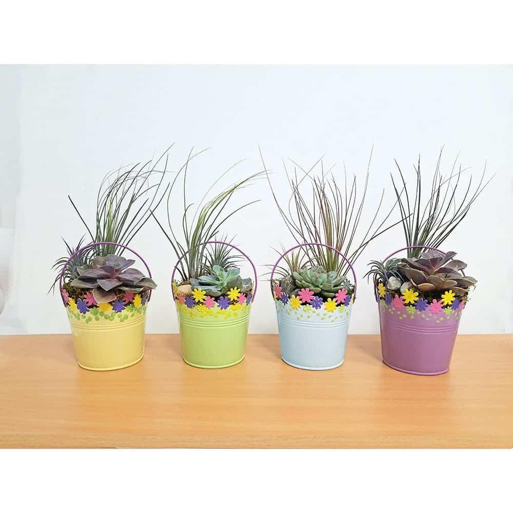 Floral Tin Bucket Air Plants & Succulents