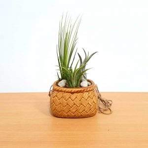 Porcelain Basket Air Plants