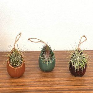 Raindrop Vase Air Plants