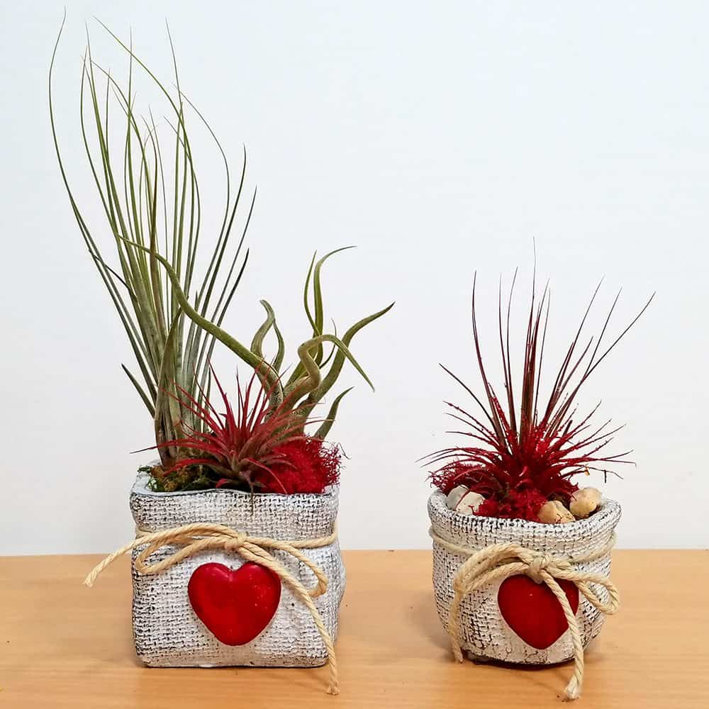 Burlap Love Vase 3 inch Air Plants