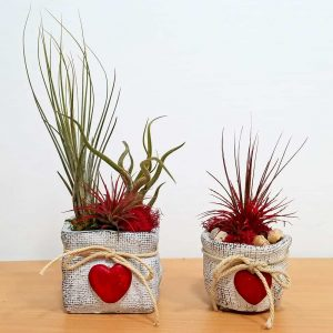 Burlap Love Vase 3 inch Air Plants