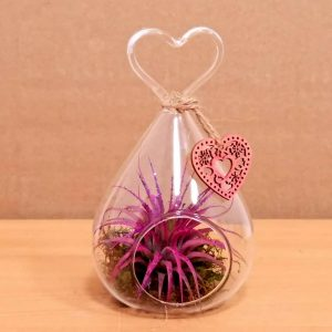 Heart Glass Hanging Air Plants