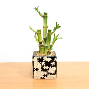 Puzzle Square Black & White Lucky Bamboo