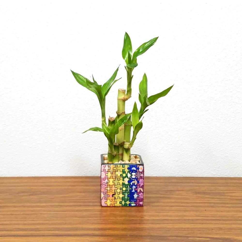 Puzzle Square Color Lucky Bamboo