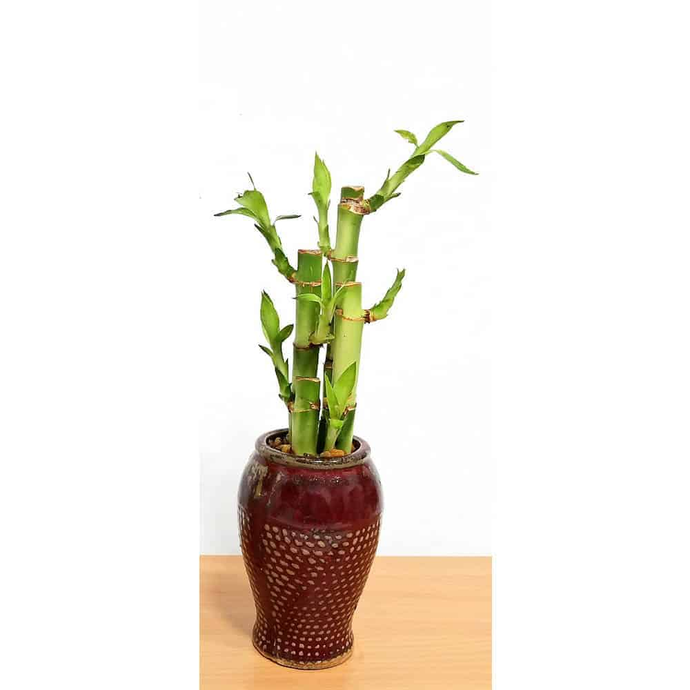 Emotion Burlap Vase 5""