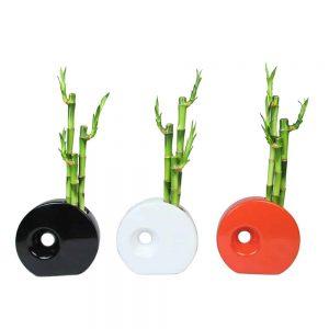 Circular Vase Lucky Bamboo