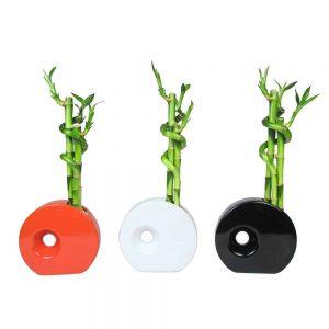 Circular Vase Spiral Lucky Bamboo