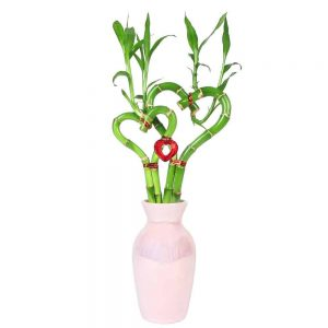 """Suave Vase 6"""" Double Heart Lucky Bamboo"""