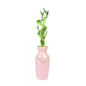 """Suave Vase 8"""" Spiral Lucky Bamboo"""