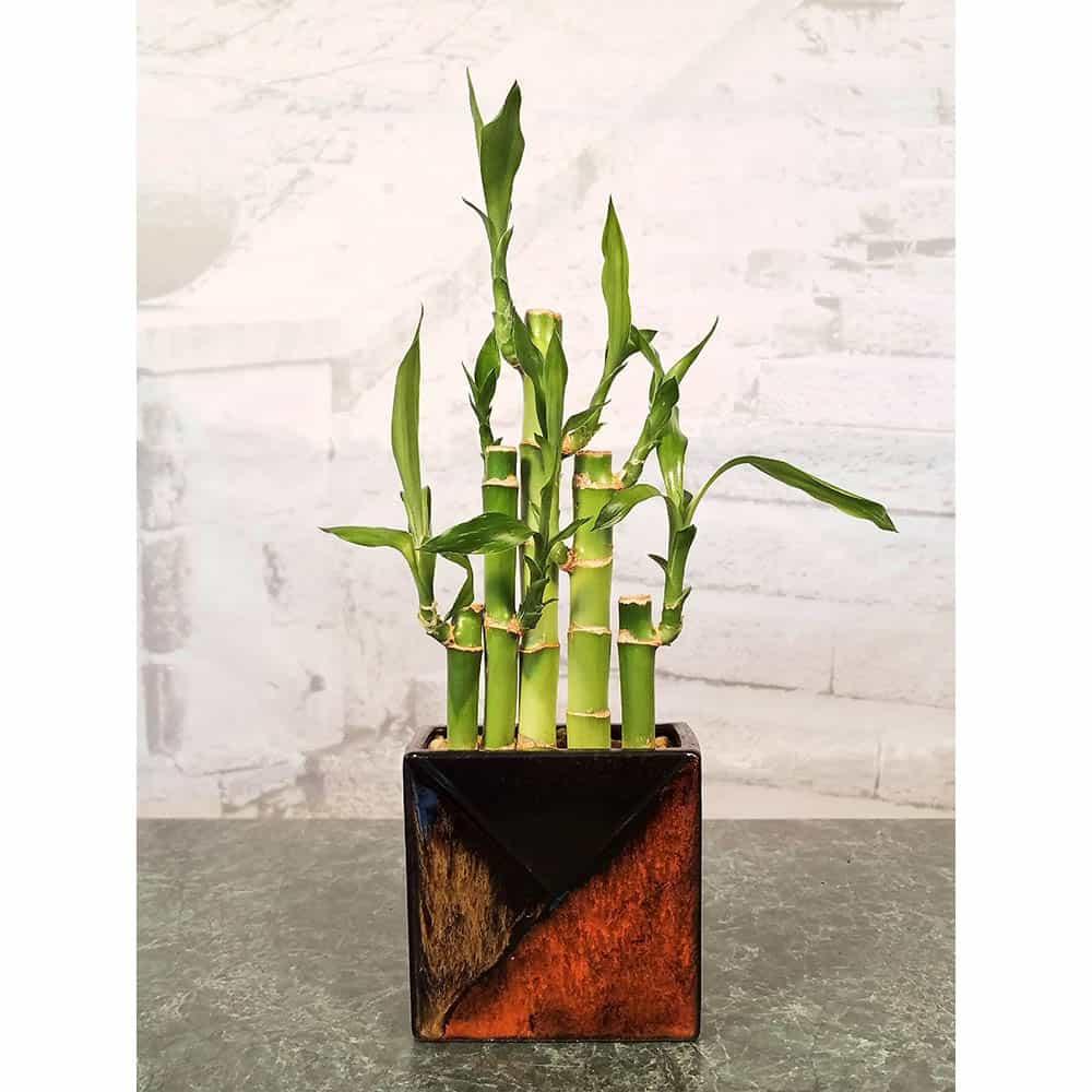 Wholesale Mosaic Rectangle Vase Lucky Bamboo