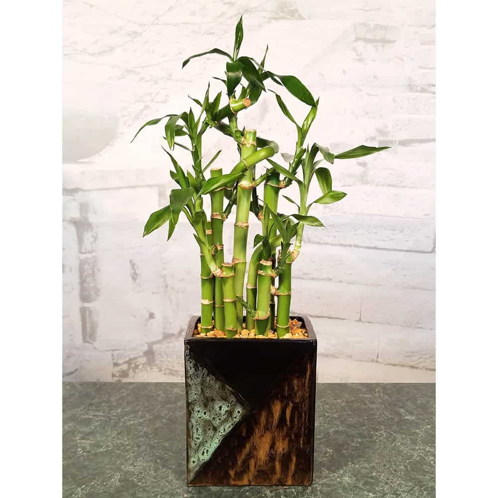 Wholesale Mosaic Vase Lucky Bamboo