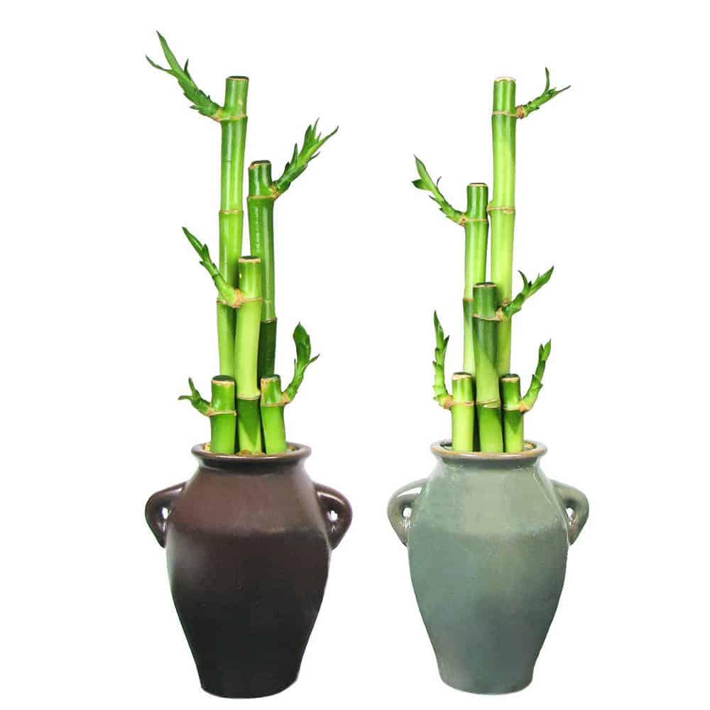 Wholesale Stoneware Vase Lucky Bamboo