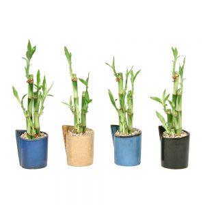 Folded Vase Short Lucky Bamboo