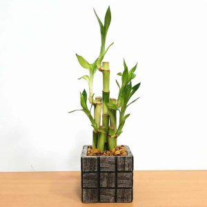 Wholesale Gray Tile Small Square Vase Lucky Bamboo