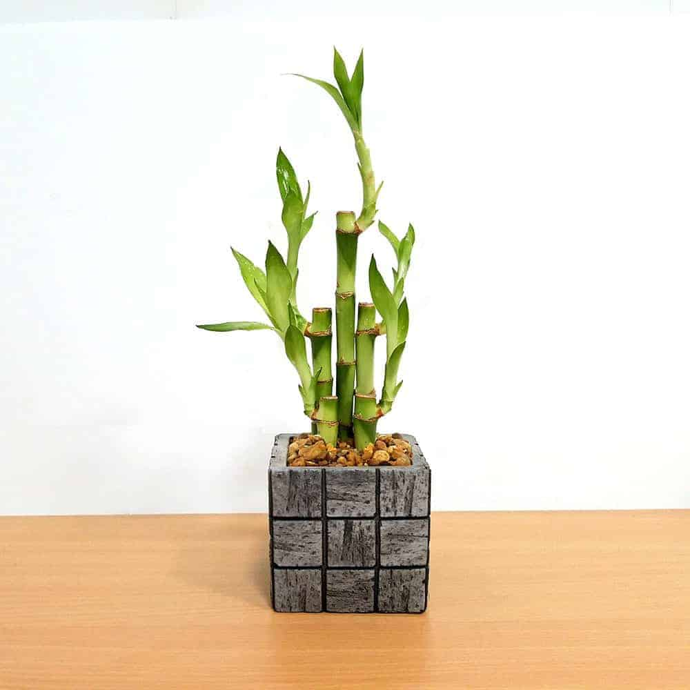 Wholesale Gray Tile Medium Square Vase Lucky Bamboo
