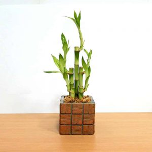 Wholesale Terracotta Tile Medium Square Lucky Bamboo