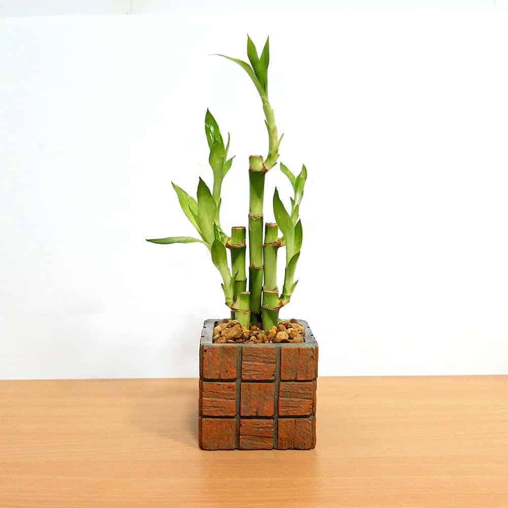 Wholesale Terracotta Tile Medium Square Lucky Bamboo