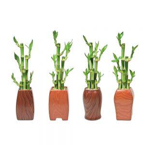Woodgrain Vase Assortment Lucky Bamboo