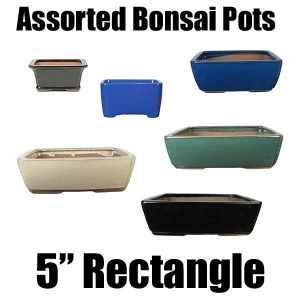 "5"" Assorted Bonsai Pots"