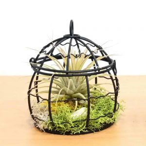 Wire Dome Small Air Plants