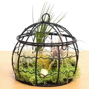 Wire Dome Large Air Plants