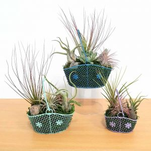Wire Basket Air Plants