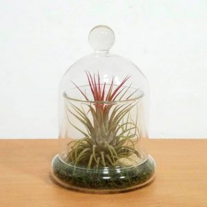 Wholesale Glass Bell Jar 5""
