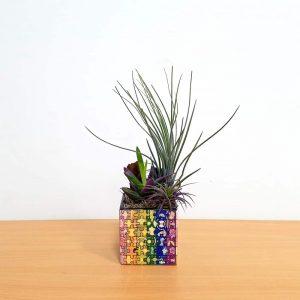 Puzzle Square Color Air Plants