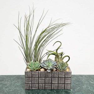 Wholesale Gray Tile Rectanular Air Plants, Succulents, Cactus