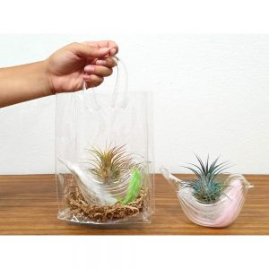 Glass Dove Air Plants & Succulents