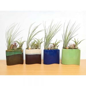 New Wave Vase Air Plants