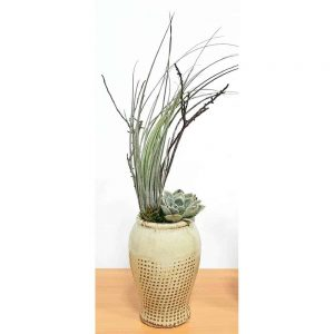 "Emotion Burlap Vase 5"" Air Plants"