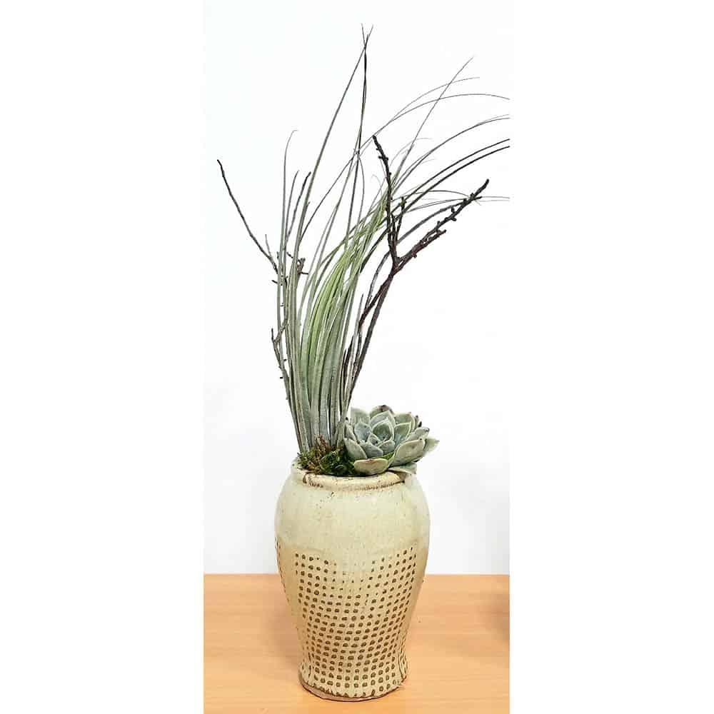 """Emotion Burlap Vase 5"""" Air Plants"""