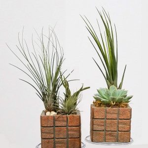 "Air Plants, Succulents, Cactus Terracotta Tile 3"" Square"
