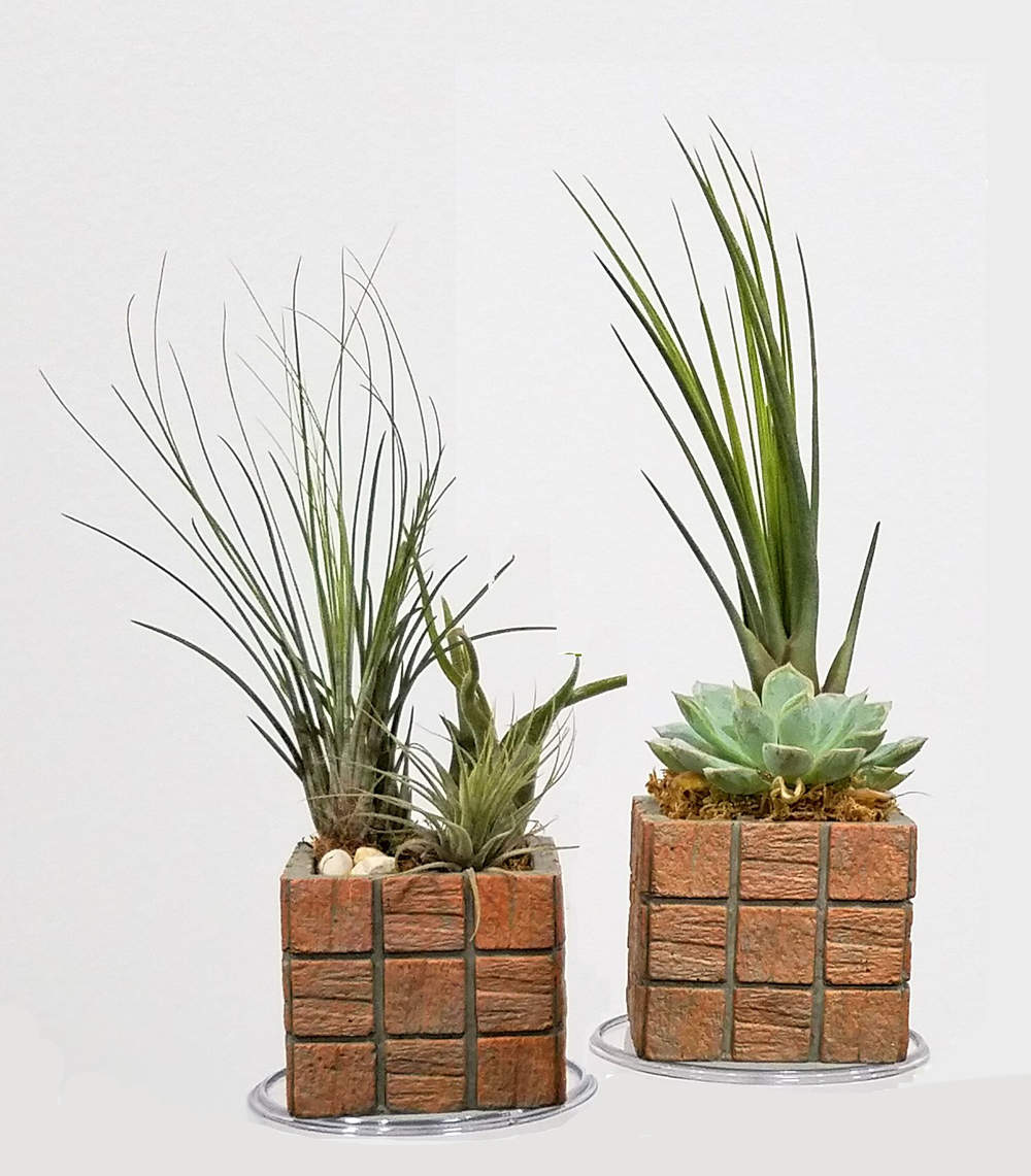 Air Plants Succulents Cactus Terracotta Tile 3 Square