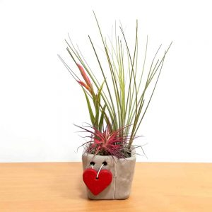 Cement Love Vase Square Small Air Plants