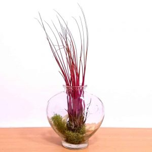 Heart Shaped Bottle Air Plants