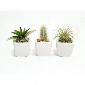 White Vase 2x2 Air Plants
