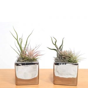 Metallic Silver Square Vase Air Plants