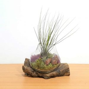 Surreal Melted Glass Driftwood Air Plants