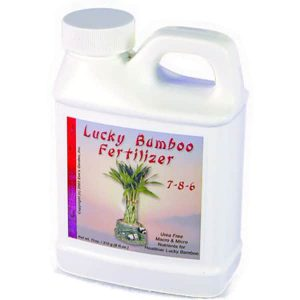 Wholesale Lucky Bamboo Fertilizer