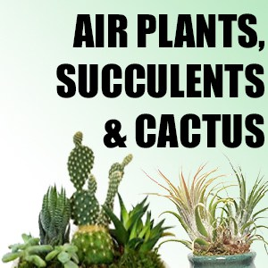 Air Plants, Succulents & Cactus