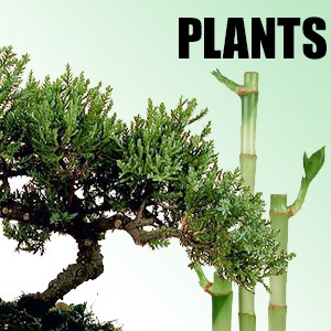 template-category-plants